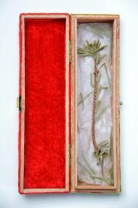Aufgeklapptes Reliquienkästchen Der Tannenbaum