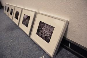Gerahmte Fotos von Sabine Höpfner in einer Reihe