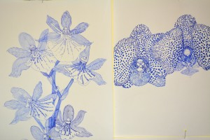 Orchideen, Detail, Schwarzer Schimmel 3