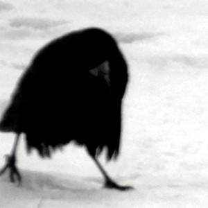 Menschengleiche Krähe im Schnee
