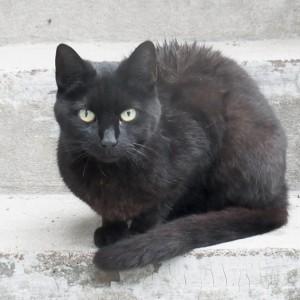 Nasse schwarze Katze auf heller Treppe