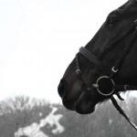 Pferd vor grauen Bäumen, künstliche Atemwolke