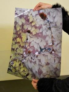 Entrolltes Foto Pflanzenbild von EVA in den Händen von Sabine Höpfner