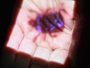 Filmprojektion auf eine Handflaeche. Bild eines sich drehenden Mistkaefers.