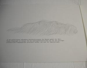 Zeichnung eines haarigen, hundeähnlichen Wesens von Jenni Tietze. Versehen miteinem Text zur Funktion des Schnurrbarts beim Mann.