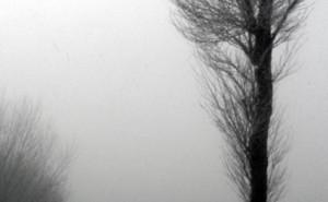 Nebel zwischen zwei Bäumen