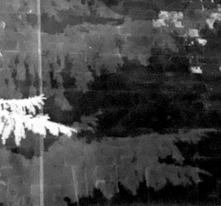 Schatten und Umrisse eines Nadelbaums auf einer Backsteinwand. Schwarzweissfoto.