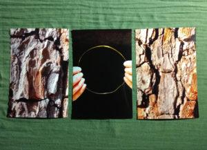 EVAs Projekt Heiliger Birnbaum mit drei neuen Fotos im Februar 2020