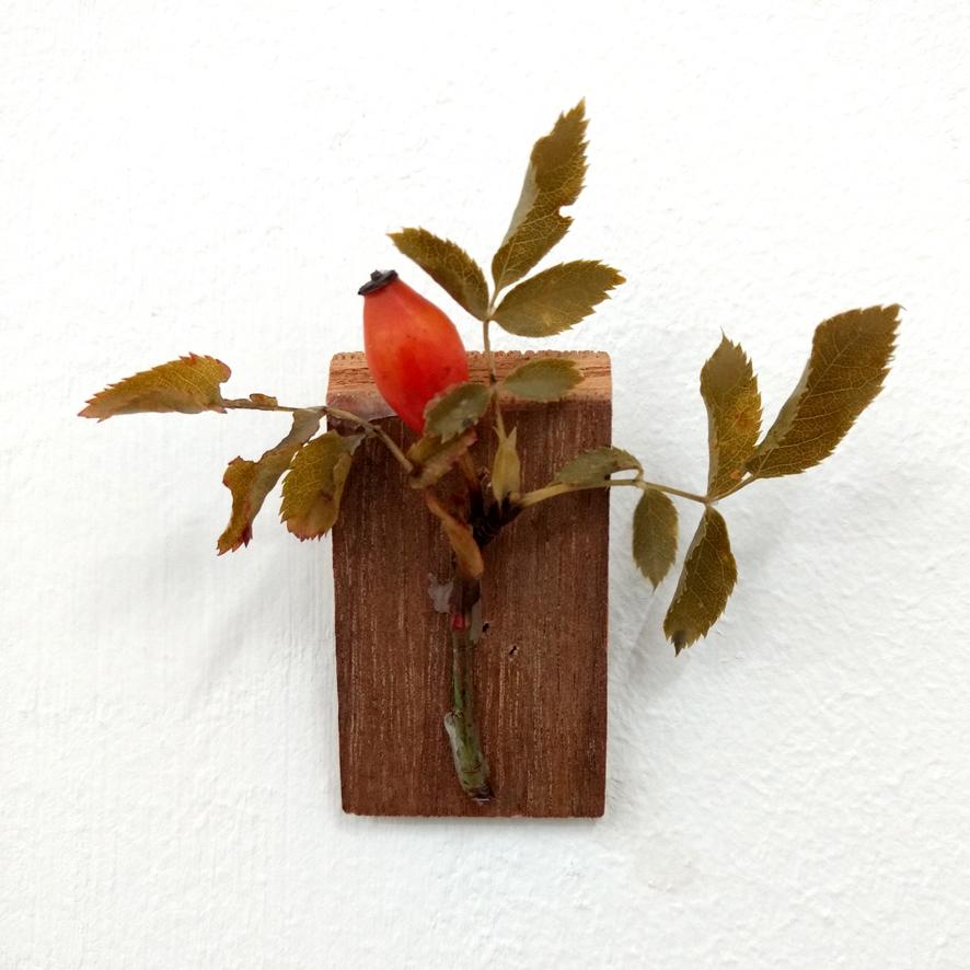 Ein in Wachs getauchter Hagebuttenzweig auf einem Stück Abfallholz, Objekt aus der Reihe Vassallenstücke von der Hamburger Künstlerin EVA.