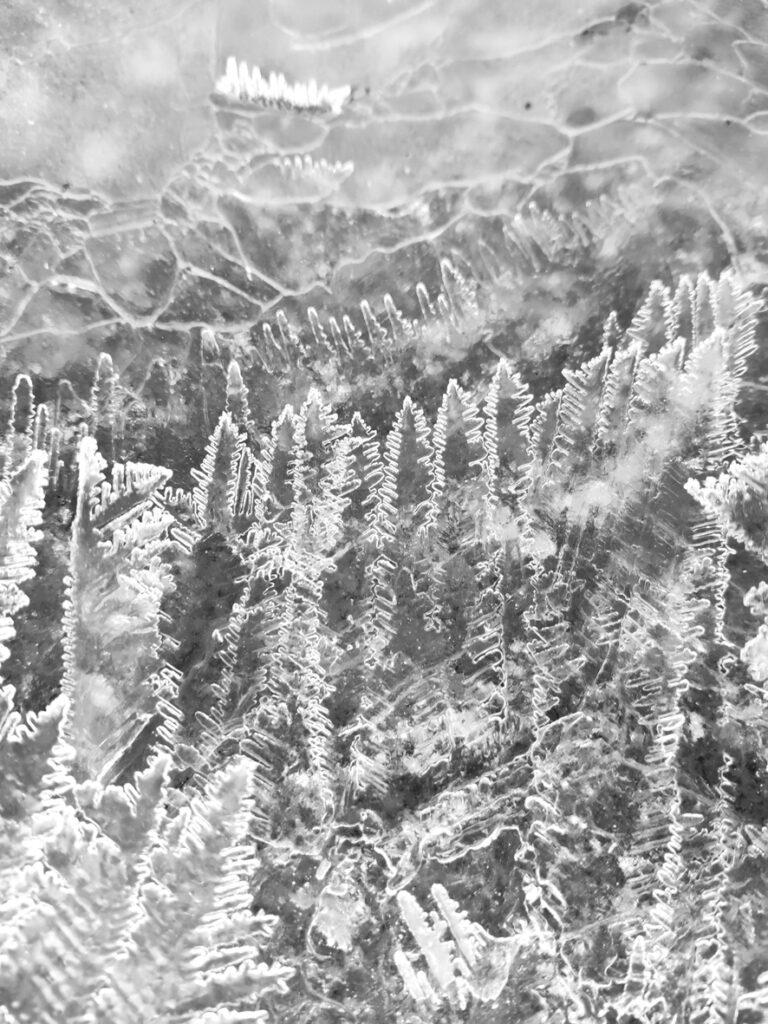 Foto von Eiskristallen EVA 2021
