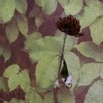 Detail aus EVAs Pflanzenfoto