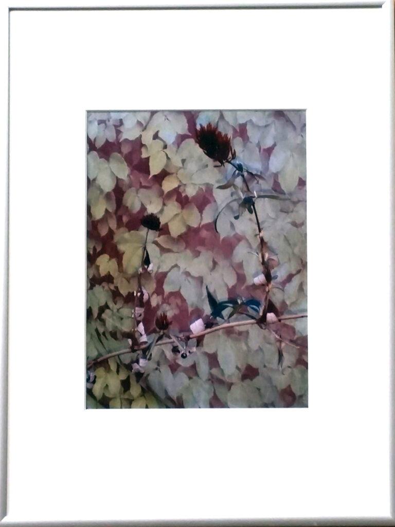 Pflanzenfoto von EVA, gerahmt